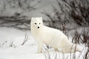 Arctic Finland Arctic Sea