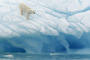 Arctic treaty on proven success model
